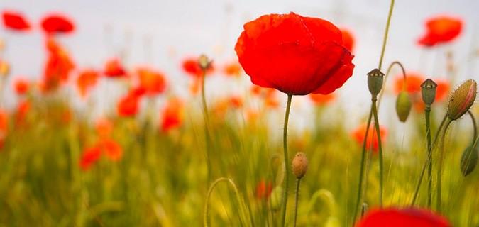 cosmetique florale à base de plantes